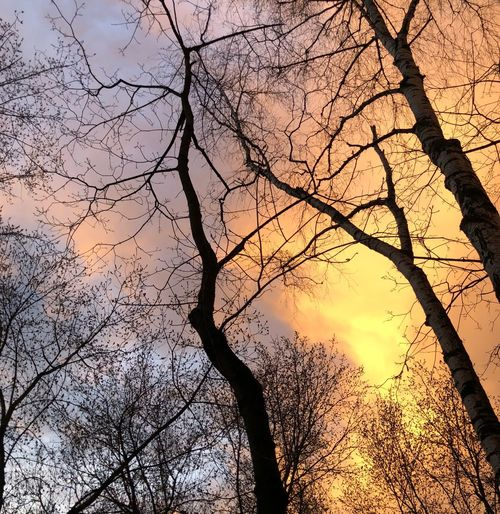 After the rain Beatiful Rain Plant No People Full Frame Sky Branch Nature Sunset Bare Tree Beauty In Nature Outdoors