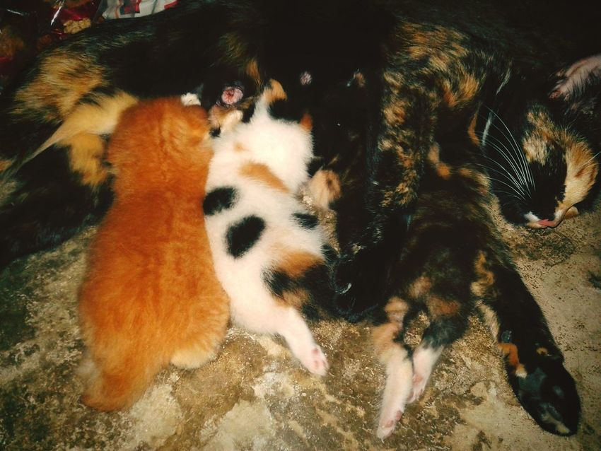Yesterday.>> New Child in my house // my cat have child when 2 week ago and she take her child to my house. Happy Family! ❤