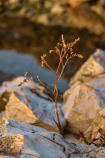 Close-up of dead plant on rock