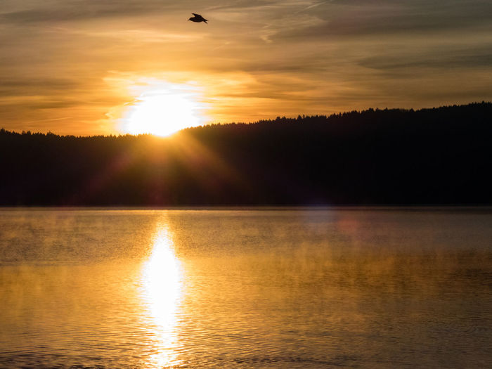 Rising. Beauty In Nature Bird Contrasts Darkness And Light Dawn Day Flying Bird Foggy Morning Idyllic Lake Lense Flare Nature No People Outdoors Reflection Scenics Silhouette Sky Sun Sun Burst Sunlight Sunrise Tranquility Water Golden Hour