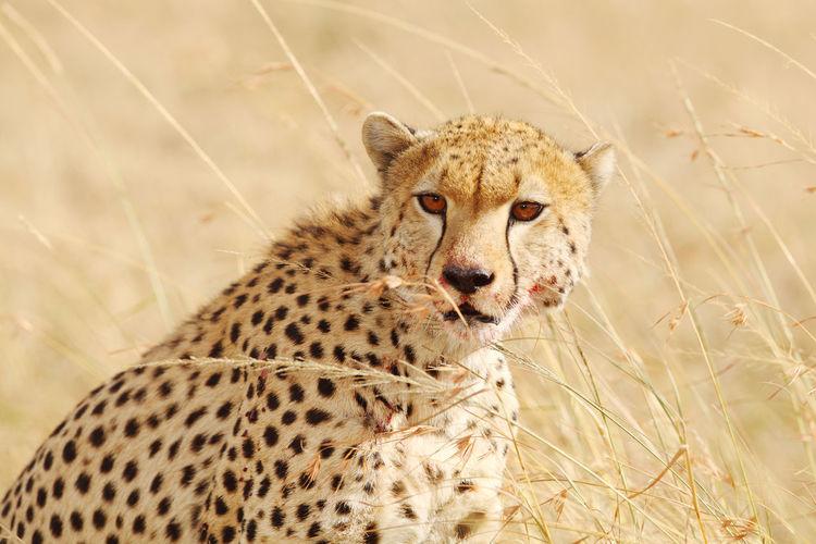 Portrait of cat in field