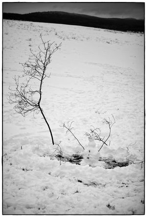 the last snowman Beauty In Nature Blackandwhite Cold Temperature Landscape Lawoe Nature No People Outdoors Snow Snowman Winter
