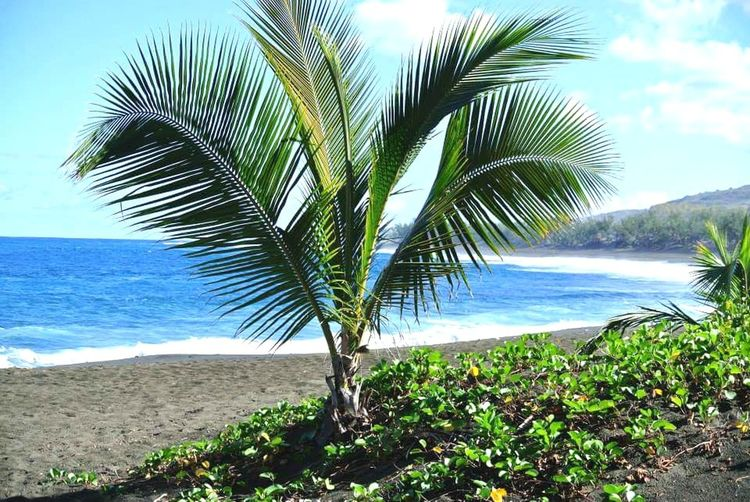 Reunion Island Reunion974 Palm Tree Palmiers Beauty In Nature Beach Beachphotography Plage Mer Sablenoir