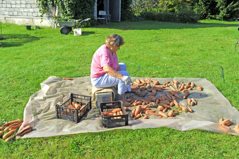 Side View Of Senior Woman With Carrots Sitting In Yard