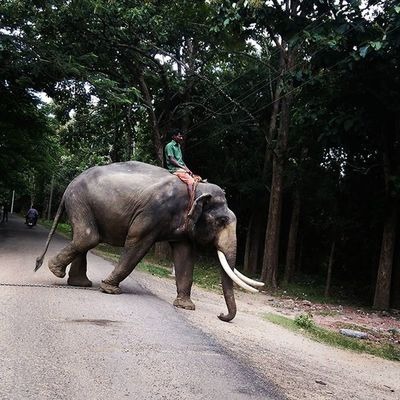 Travel Siruvani Coimbatore Covaikutralam Elephant Ontheroad Pride Excited Elephant: It's time, c'mon let's go for a walk