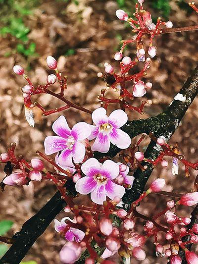 Petal Blooming