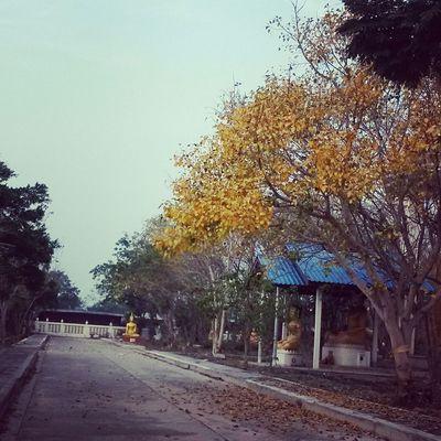 ใบไม้เปลี่ยนสี...เปรียบกับใจคนที่เปลี่ยนแปลง😊