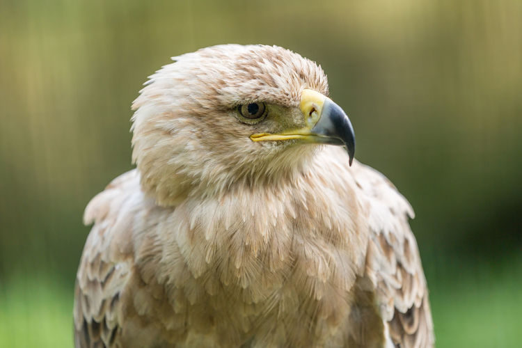 Animal Themes Animal Wildlife Animals In The Wild Beak Bird Bird Of Prey Close-up Day Focus On Foreground Nature No People One Animal Outdoors