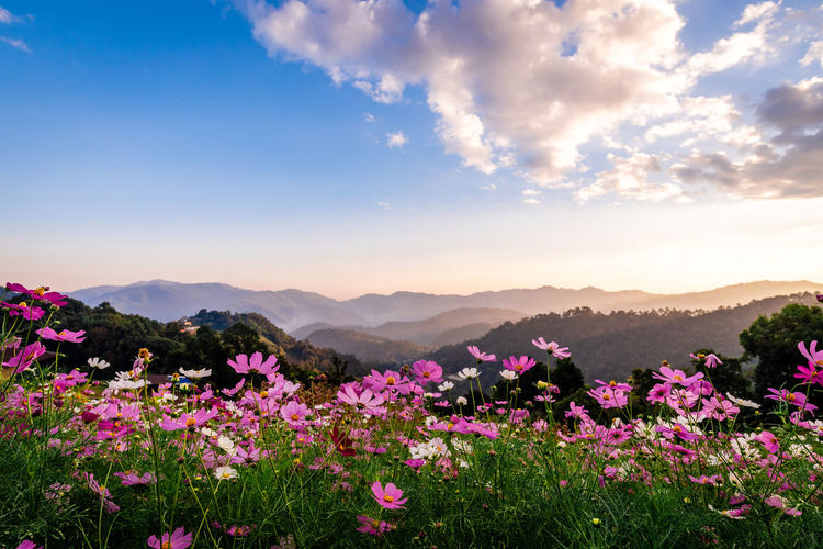 Scenic view of pink flowering plants against sky