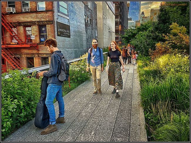 A class outing on the High Line Park. 11817547