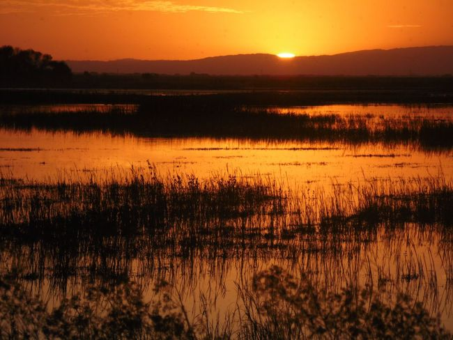 Sunset Scenics Tranquil Scene Lake Tranquility Water Beauty In Nature Mountain Reflection Reed - Grass Family Majestic Grass Awe Plant Nature Idyllic Non-urban Scene Sun Standing Water Silhouette Tangerine Sky Found On The Roll The Purist (no Edit, No Filter) Contre-jour Spock