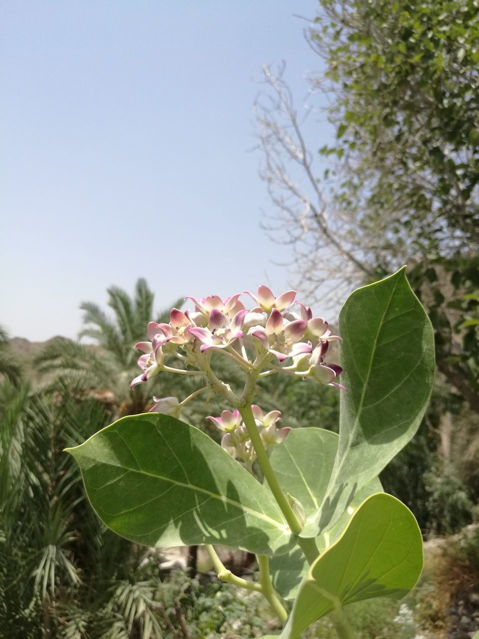 Close-Up Of Flowers And Leaves Against Clear Sky