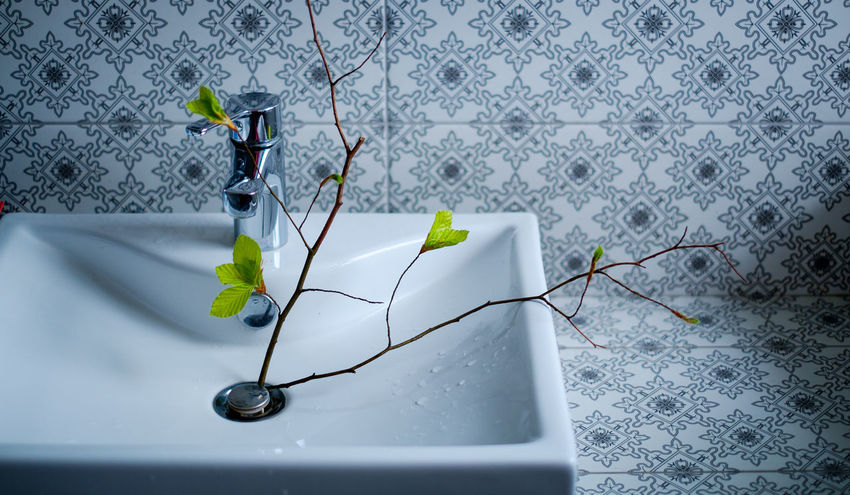 Alive  Bathroom Cozy At Home Cozy Moments Cozy Place Drink Health Healthy Healthy Lifestyle Leaf Life Living Luxury New Life Spring Springtime Sustainability Sustainable Tap Water Tree Washroom Water Wellbeing Wellness