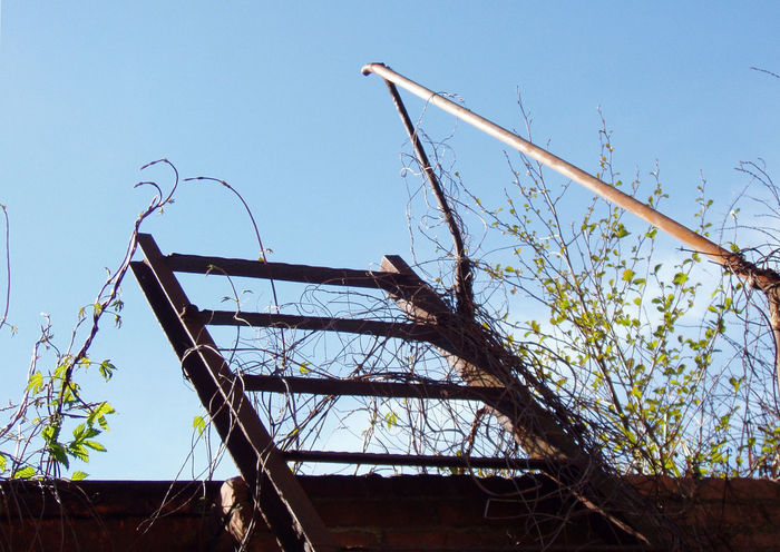Clear Sky Day Dream Fly Over Get In Get In The Sky Infinity Ladder Ladder In Sky Ladder Infinity Ladder To Nowhere Leaves Low Angle View Metal Near Sky No People Paradise Plants Rusted Metal  Rusty Rusty Ladder Rusty Metal Rusty Staircase Sky Staircase