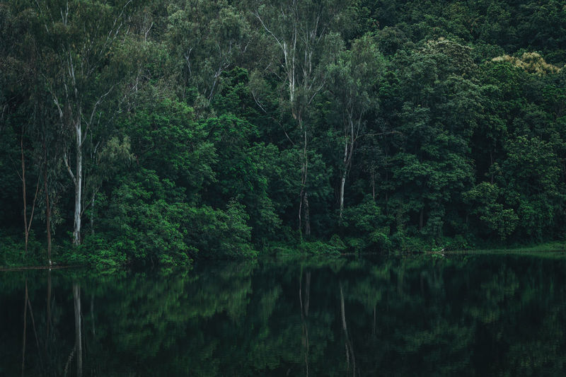 Green forest reflection in water Green Reflection Bush Eucalyptus Foliage Forest Forest Photography Forest Trees Green Color Green Foliage Green Forest Lake Nature Reflection Tranquil Scene Tranquility Tree Water Woods