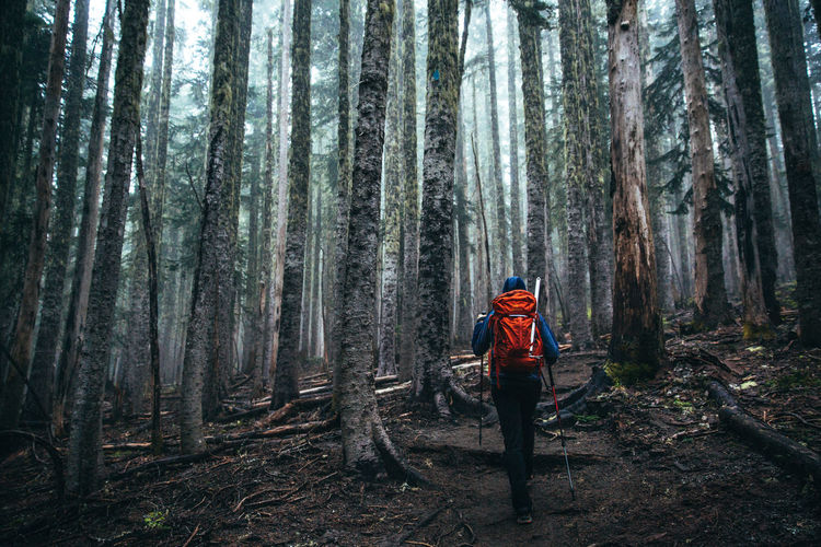 Forest Tree Land One Person Plant Trunk Tree Trunk WoodLand Backpack Outdoors Hiking Adventure Activity Real People Lifestyles Leisure Activity Nature