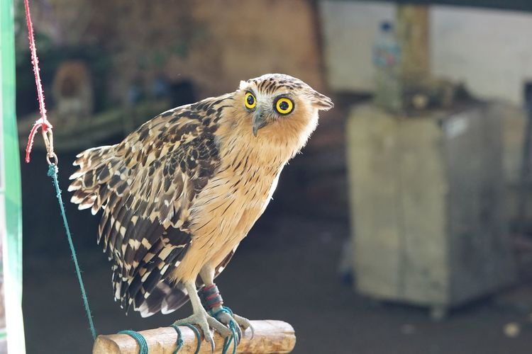 Hello world EyeEm Selects Animal Animal Themes Vertebrate Bird One Animal Animal Wildlife Animals In Captivity Owl Close-up Outdoors Day Perching Pets Portrait No People Bird Of Prey Animals In The Wild Focus On Foreground Looking Looking Away