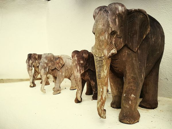 Elephant family EyeEm Selects Animal Wildlife Animals In The Wild Mammal African Elephant Safari Animals