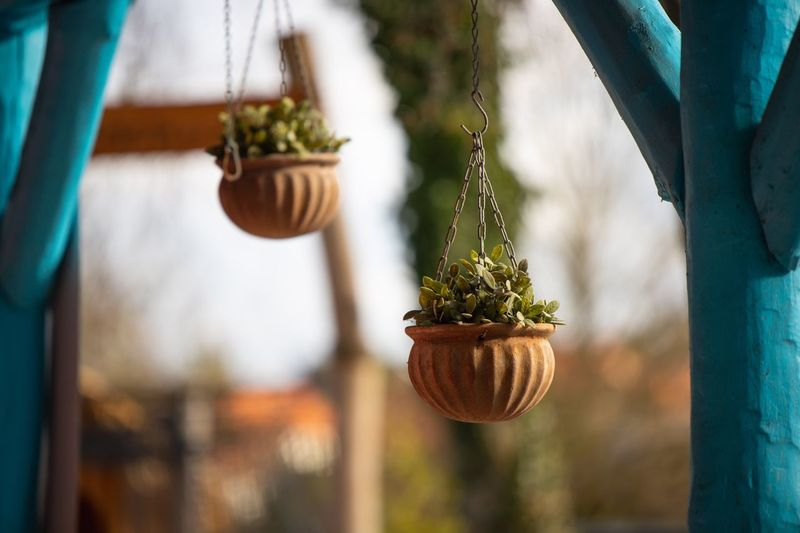 Close-up of potted plant hanging in yard