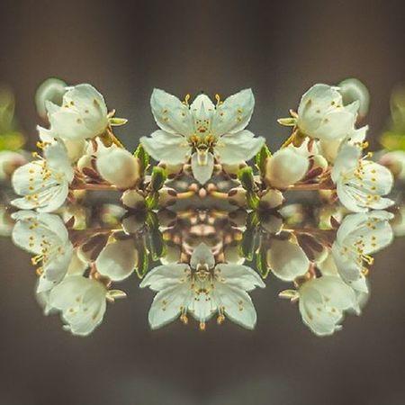 Весенние цветочки 🌻🌹🌺🌸🌷 беларусь Природа цветы весна апрель  Belarus Nature Flowers Follow Spring Beutiful  Photo Canon Lusienka_pilets отражение