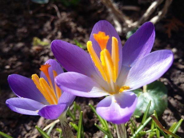 Springtime Spring Flowers Spring2016 Beautifulgarden Mygarden