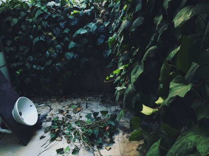 Green Nature Leaves Shadow Light Empty Places Empty Photography Sky Sun Sunlight White Pieces Art ArtWork Photoshoot Capture The Moment First Eyeem Photo