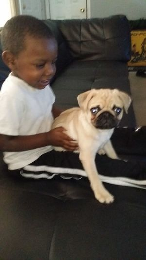 My nephew J.R finally meet King Ilovemypug