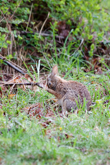 Animal Wildlife Animals In The Wild Plant Grass No People Land Nature Green Color Day Outdoors Side View Rabbit Bashful Spring