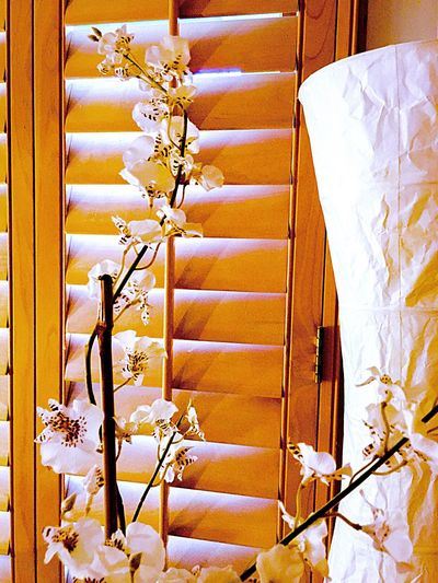 Interior Style room decoration Interior Design Style Decoration Architecture Home House My House Flower Asian Flower Lamp Floor Lamp Window Window Shade Sunlight Detail Material Color Palette Eyeemphoto My Favorite Place