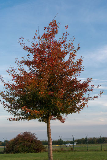 Short Time before sunset Autumn colors Detmold Airfield Airplane Around Sunset Autumn Beauty In Nature Change Cloud - Sky Day Environment Field Grass Idyllic Land Landscpae Nature No People Outdoors Plant Scenic View Scenics - Nature Sky Tranquil Scene Tranquility Tree