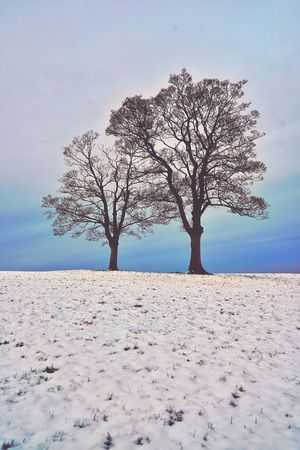 Week On Eyeem The Week On EyeEm Snow And Tree Xmas Card Xmas Time Christmastime Sky And Sea Landscape Remote Tranquility Bare Tree Isolated Tree Solitude Lone Yorkshire Yorkshire Dales Peak District  Peak District Northern England Christmas Card Snow Scene  Tree And Snow Shades Of Winter