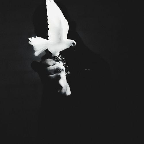 Close-up of hand holding umbrella over black background