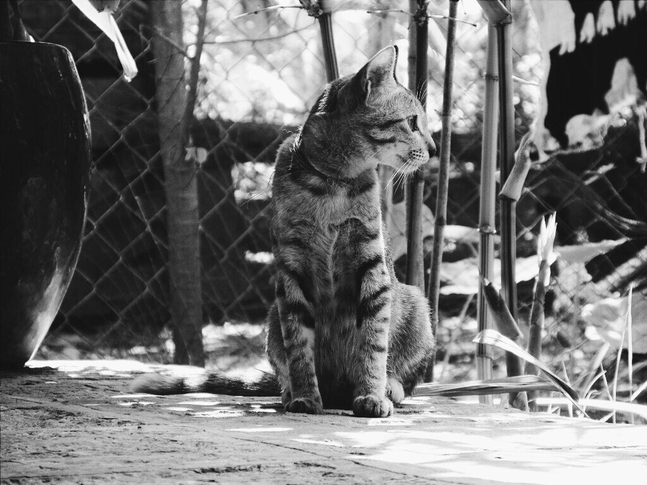 Full Length Of Cat Looking Away