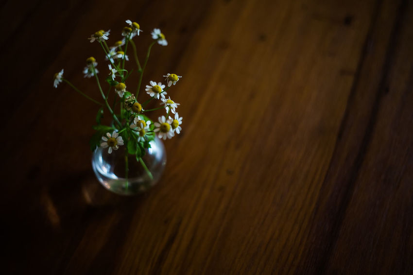 coffee time Coffee Small Flowers Timeless Beauty In Nature Close-up Day Flower Flower Head Fragility Freshness Growth Indoors  Nature No People On The Table, Plant Selective Focus Table Time Unforgettable Vase Of Flowers Wood - Material