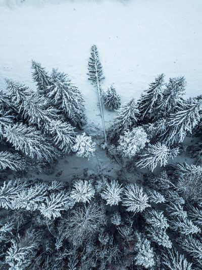 Winter Cold Temperature Snow Frozen Nature Plant Ice Day Beauty In Nature Covering White Color Tree Snowflake Tranquility Frost Land Outdoors Extreme Weather Coniferous Tree Pine Tree Fir Tree Snowing Aerial View Dronephotography Tree