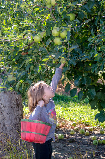 an adorable little girl picks apples in a Michigan USA orchard Autumn Females Happy Active Basket Caucasian Child Childhood Day Fall Girl Kid Michigan Orchard Nature One Person Outdoors Picking Apples Seasonal Tree The Photojournalist - 2018 EyeEm Awards