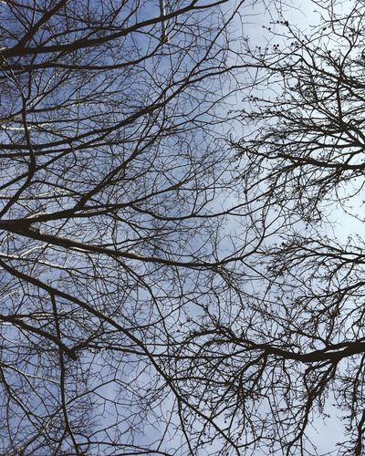 Sky Lookingup Blue Clouds Trees Branch Branches Busy Lines Abstract