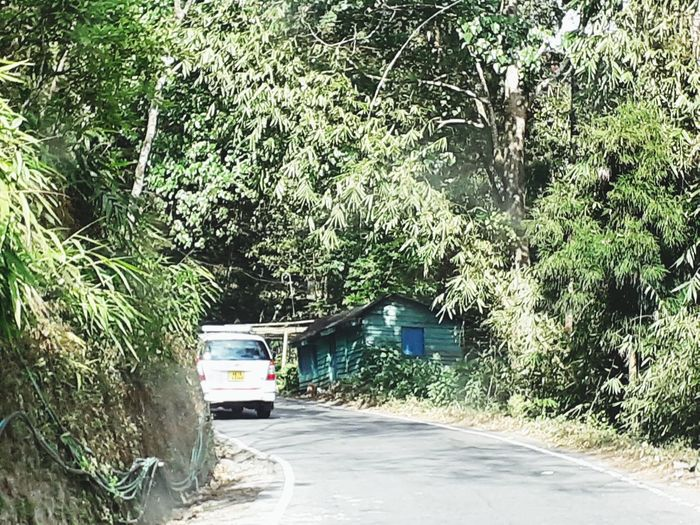 Cars on road by trees