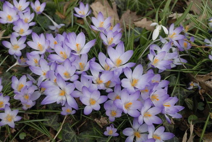 Im Park entdeckt Flower Nature Beauty In Nature Outdoors Flower Photography Flowers, Nature And Beauty Blumen Blumenfotografie Blume🌸