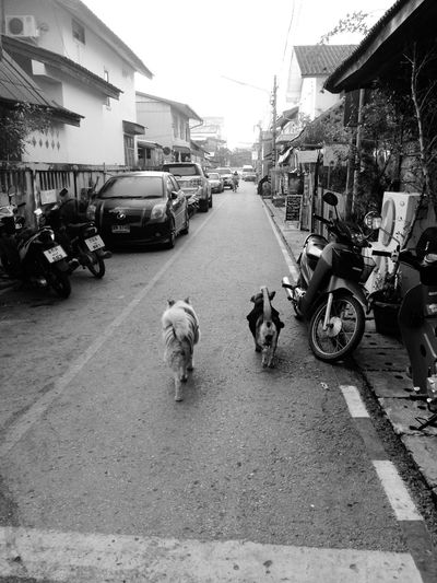 We will grow old together Loei,thailand Dog Dogs Dog Love Dog❤ Dogslife Dogs Of EyeEm Doglover Dogstagram Blackandwhite Photography Black And White Photography Dogsofinstagram Dog Walking Doggy Doggie Dog Lover Dog Life Doglife Doglovers Dog Days Dogs_of_instagram Dogwalk Black And White Collection  Blackandwhite