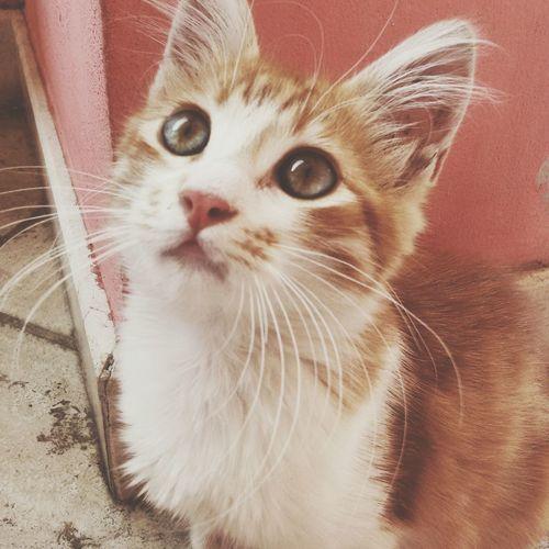 The Great Outdoors - 2015 EyeEm Awards Cat Whiteandorange Animal CatEye