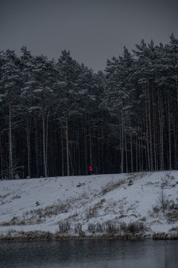 Snow covered land and trees in forest against sky
