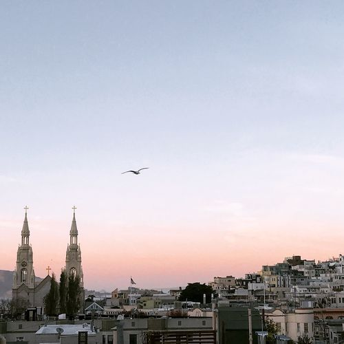 Flying over North Beach Church Tower Scenic Sunset_collection Architecture Bird Cityscape Flying Spread Wings Sunset Travel Destinations