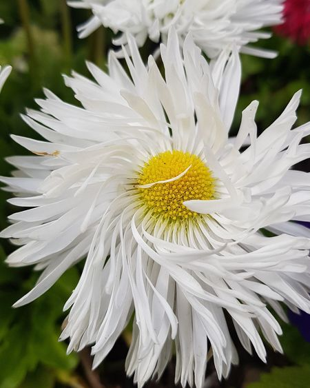 Flower Head Flower Petal Uncultivated Stamen Pollen Springtime White Color Summer Close-up Blooming In Bloom Plant Life