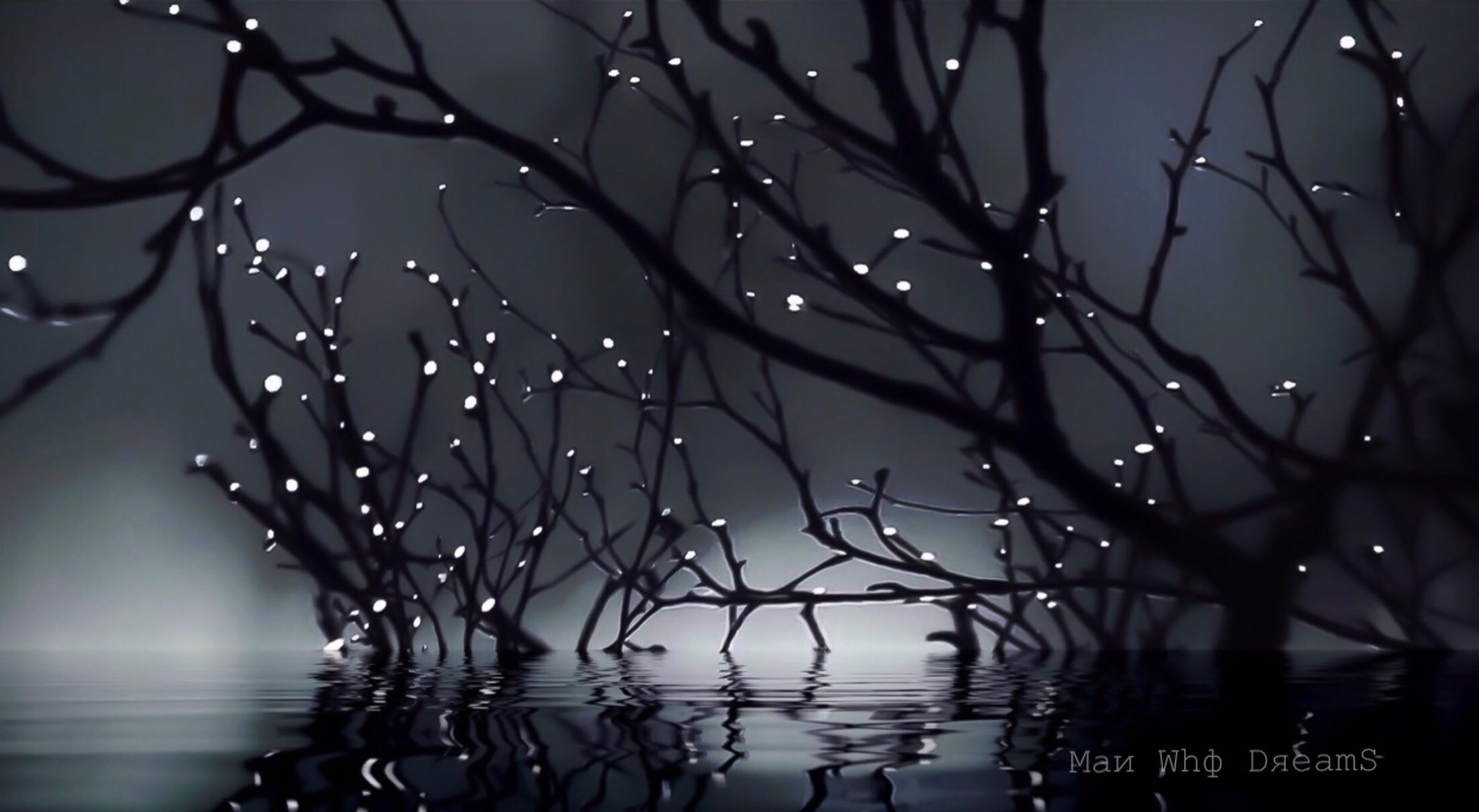 tree, water, no people, branch, bare tree, plant, nature, focus on foreground, selective focus, close-up, beauty in nature, drop, reflection, tranquility, outdoors, night, lake, sky, silhouette, complexity