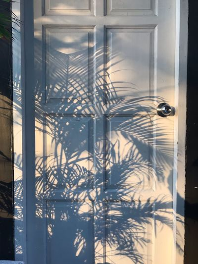 Shadow Reflection No People Glass - Material Window Nature Day Built Structure Winter Close-up Architecture Tree Indoors  Water Plant Transparent Cold Temperature