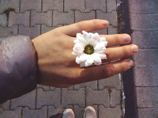 Hand is so bad 😏 Daisy Walking Around Sunset Cold Flower