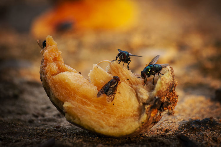 Close-up of housefly on land