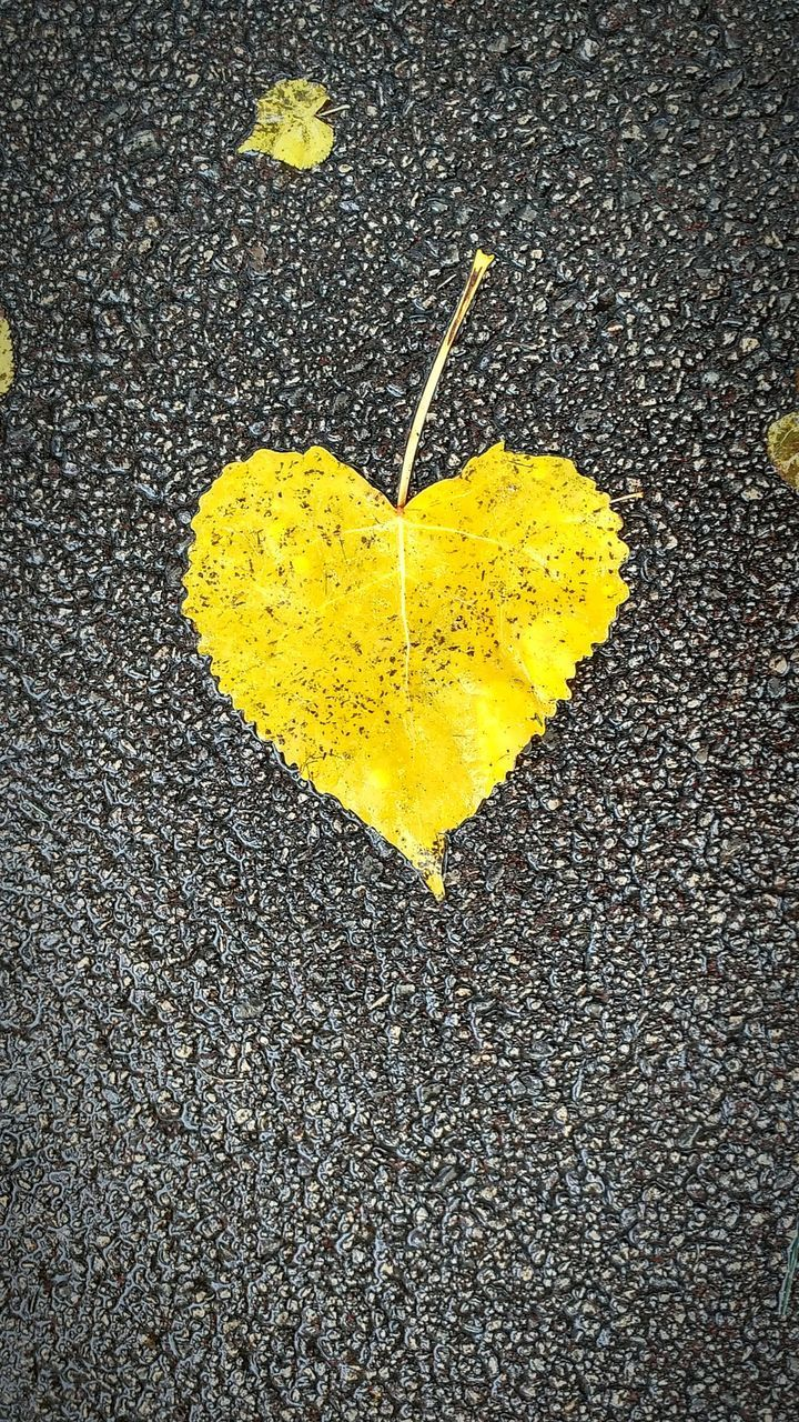 yellow, no people, heart shape, emotion, positive emotion, close-up, love, nature, textured, day, outdoors, road, leaf, plant part, high angle view, asphalt, city, still life, shape, falling