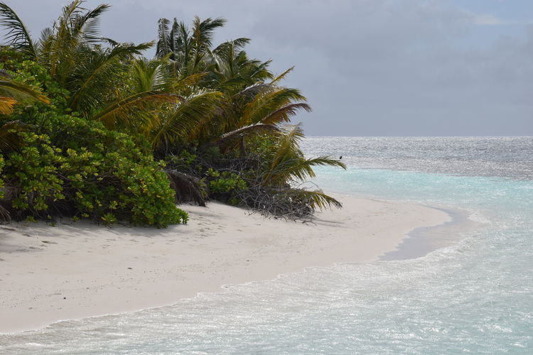 white beach (Maldives 2017) ASIA Beach Beauty In Nature Day Honeymoon Horizon Over Water Maldives Nature No People Outdoors Palm Tree Sand Scenics Sea Sky Travel Tree Vacations Water